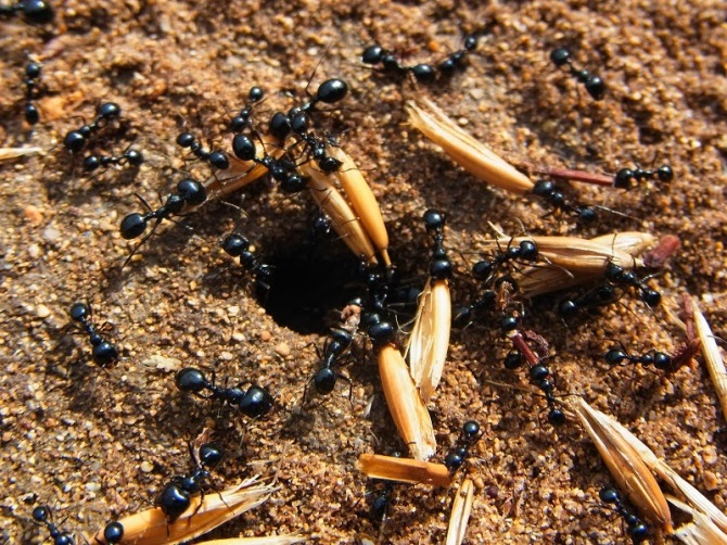 ants_cbmen_41