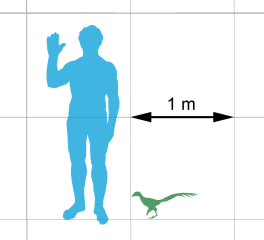 989px-jinfengopteryx-scale