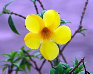 flower-1935634_960_720