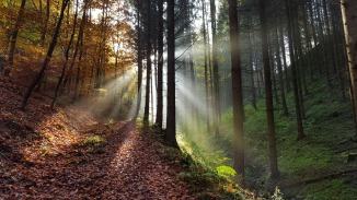 Autumn Atmosphere Nature Mystical Forest Glade